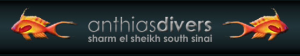 Anthias Divers